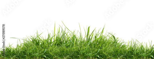 Poster Gras Fresh green grass isolated against a white background