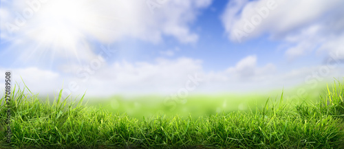 Fotografie, Obraz Lush spring green grass background with a sunny summer blue sky over fields and pastures