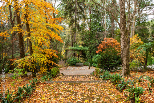 Foto op Canvas Begraafplaats Wooden bench among golden trees in a park in autumn