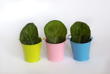 Three Colorful Buckets With Wh...