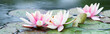 Leinwandbild Motiv Seerosenpanorama