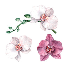 Watercolor Orchid Branch, Hand...