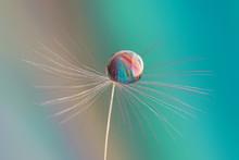 Macro Of Dandelion Seed Top Wi...