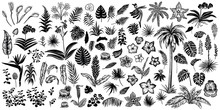 Tropical Leaves And Flowers, Vector Line And Silhouette Sketches. Big Collection Of Exotical Flora.