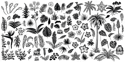 Fényképezés Tropical leaves and flowers, vector line and silhouette sketches