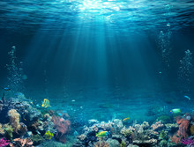 Underwater Scene - Tropical Se...