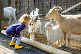 Fototapeta Zwierzęta - Adorable cute toddler girl feeding little goats and sheeps on a kids farm. Beautiful baby child petting animals in the zoo. Excited and happy girl on family weekend.
