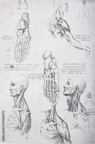 Anatomical notes Poster Mural XXL