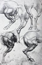 Sketches Of Horses, Pencil Drawing By Leonardo Da Vinci In The Vintage Book Leonardo Da Vinci By A.L. Volynskiy, St. Petersburg, 1899