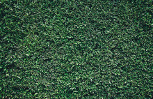 Natural Green Leaves Wall Text...