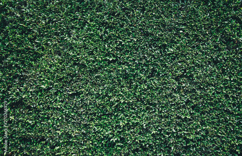 Fotomural  Natural green leaves wall texture background