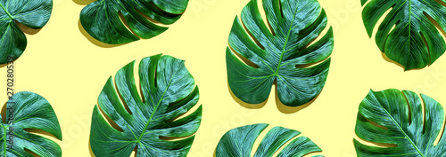 Tropical plant Monstera leaves overhead view flat lay - 270280539