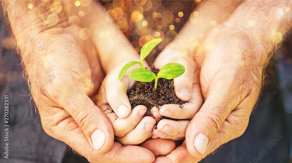 Leinwandbild Motiv - BillionPhotos.com : Senior man and kid holding green plant in hands