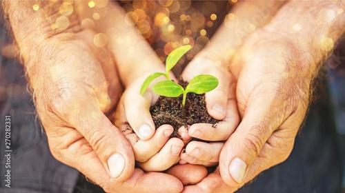 Foto auf Leinwand Texturen Senior man and kid holding green plant in hands