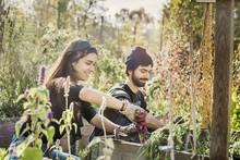 Smiling Couple Gardening In Garden