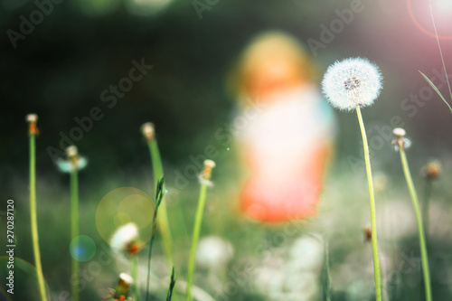 Dandelion on the field. Woman sitting in the background
