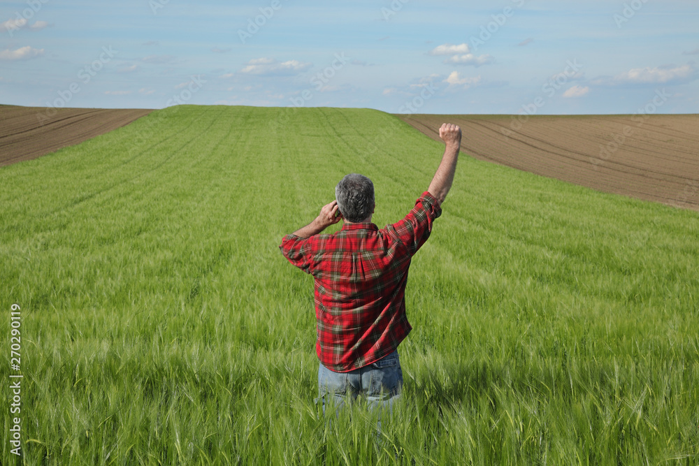 Fototapety, obrazy: Farmer or agronomist  inspecting quality of wheat plants in field, speaking by mobile phone and gesturing with hand up, agriculture in spring