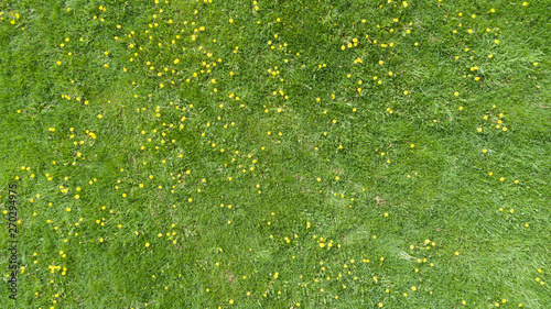 Aerial view of a summer field with yellow flowers - 270294975
