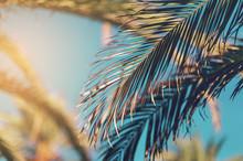 Palm Tree Against Blue Sky, Vi...