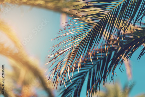 Palm tree against blue sky, vintage toned