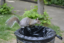 The Poor Little Squirrel Is Lo...
