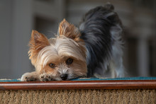 Cute Dog Looking