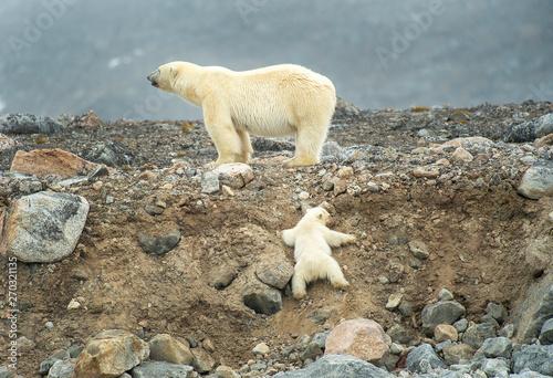 Recess Fitting Polar bear Polar bear mother & cub