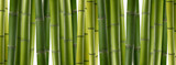 the background of green bamboo