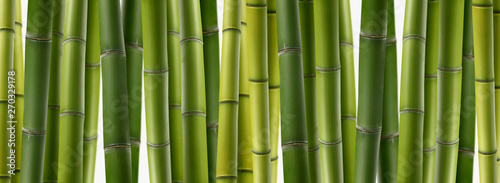 Tuinposter Bamboe the background of green bamboo