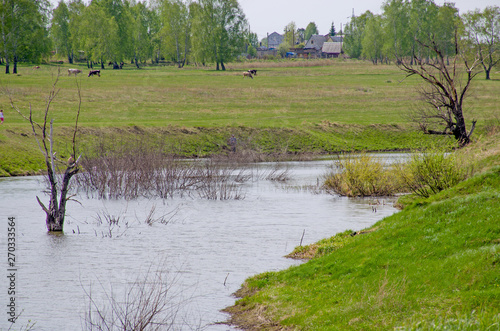 Poster Nature landscape the wood in the spring to Siberia Russia