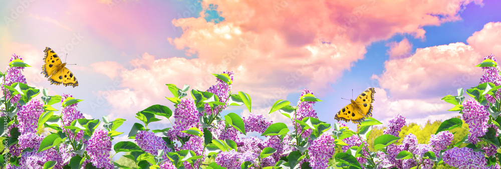 Fototapeta Lilac flowers and butterflies in garden against the blue sky with spectacular clouds