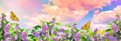 Papiers peints Lilac Lilac flowers and butterflies in garden against the blue sky with spectacular clouds