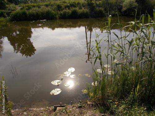 Urok wiejskiej rzeki o poranku w promieniach słońca. Trzciel, Polska - fototapety na wymiar