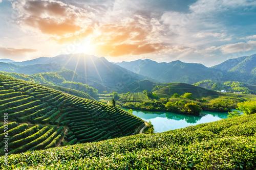 Beautiful green tea plantation natural scenery Wallpaper Mural