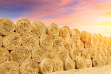 Round Straw Bales Haystack On Farmland At Sunset