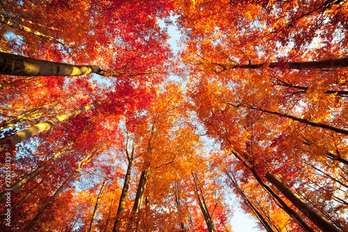 Foto auf Gartenposter Ziegel Bottom view of the tops of trees in the autumn forest. Splendid morning scene in the colorful woodland. Beauty of nature concept background.