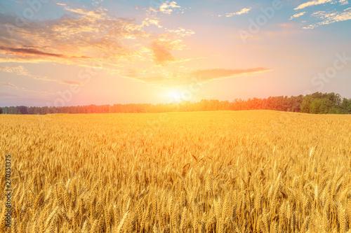 Montage in der Fensternische Melone Wheat crop field sunset landscape