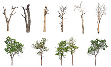 Isolated Dead Tree Collection ...