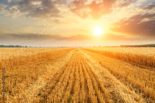 Canvas Prints Culture Wheat crop field sunset landscape