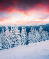 Obraz na Szkle Góry Dramatic winter sunrise in Carpathian mountains with snow covered fir trees. Colorful outdoor scene, Happy New Year celebration concept. Artistic style post processed photo.