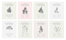 Set Of Customizable Vintage Label Of Natural Organic Herbal Products.