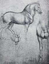Sketch Of Horse, Pencil Drawin...
