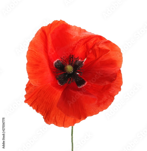 Photo  Red poppy flower isolated on white background, clipping path