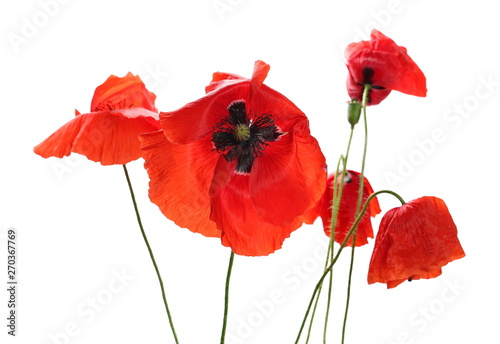 Photo  Red poppy flowers isolated on white background, clipping path
