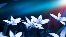 Floral Background In Neon Color. Background Macro Grass, Blurred Bokeh, Neon Light. Nature