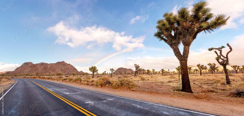 Fototapety, obrazy: Dessert road with Joshua trees and fantastic landscape around. California, USA.