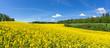Leinwandbild Motiv Geschwungenes, hügeliges, blühendes Rapsfeld in malerischer Landschaft am Waldrand