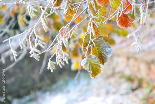 early frost Fototapet