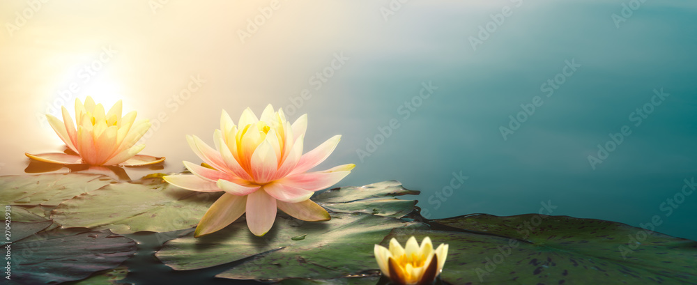 Leinwandbild Motiv - powerstock :  lotus flower in pond