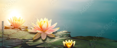 Tuinposter Waterlelies lotus flower in pond